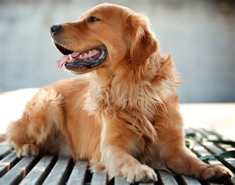dog breeds images list types  dogs  research lab
