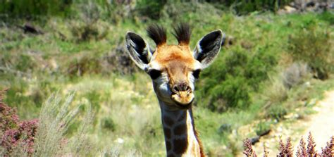 10 Of The Most Fascinating South African Animals To