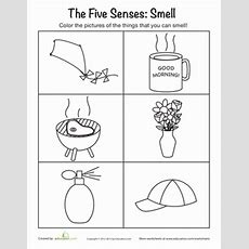 The Five Senses Smelling  Worksheet Educationcom