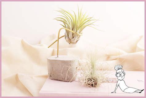 tillandsien im glas diy luftpflanzen halter aus beton basteln frau friemel
