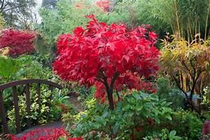 Schöne Pflanzen Für Den Garten : winterharte pflanzen den garten das ganze jahr lang ~ Michelbontemps.com Haus und Dekorationen