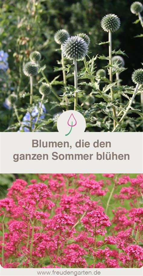 Lange Blühende Blumen by Blumen Die Lange Bl 252 Hen