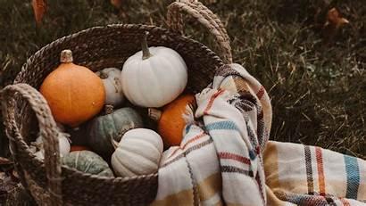 Pumpkin Plaid Basket Harvest Background Autumn 4k