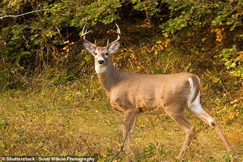 Deadly Disease That Turns Deer Into Zombies Has Spread To