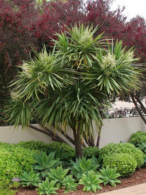 yucca palme winterhart yucca palme 26 fantastische bilder zur inspiration archzine net