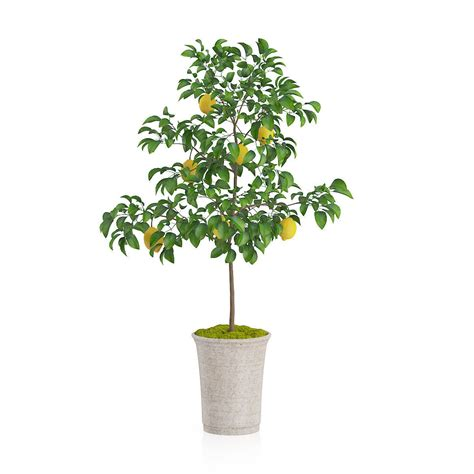 potted lemon tree 3d model max obj fbx c4d mtl cgtrader