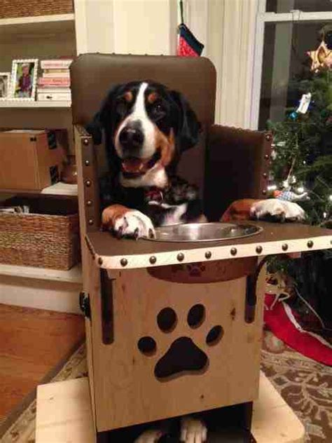 special chair  saving  lives  hundreds  dogs
