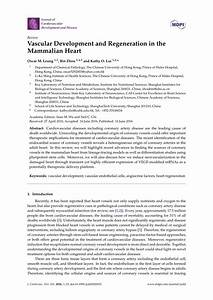(PDF) Vascular Development and Regeneration in the ...