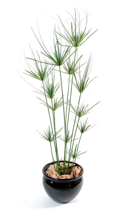 plante artificielle papyrus ornemental plastique en pot int 233 rieur ext 233 rieur h 140cm vert