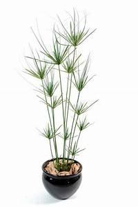 Plante D Extérieur En Pot : plante artificielle papyrus ornemental plastique en pot int rieur ext rieur h 140cm vert ~ Teatrodelosmanantiales.com Idées de Décoration