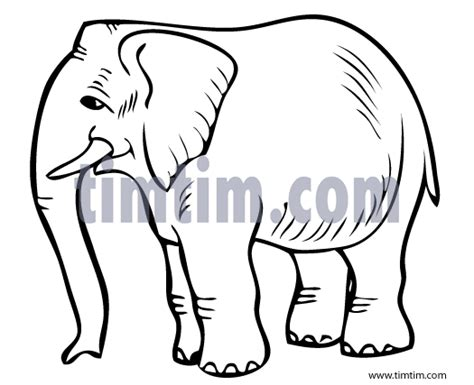 wild animal  drawings sketch coloring page