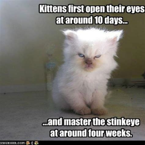 cat facts   funny face  sense  humor