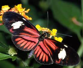 Tropical Rainforest Animals and Insects