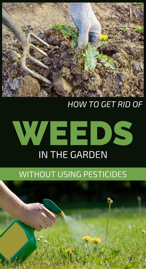 rid  weeds   garden