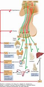 Chapter 171  Disorders Of The Anterior Pituitary And