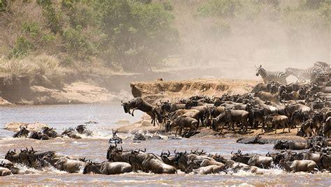unesco world heritage site serengeti national park afro