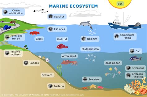 marine ecosystem science learning hub