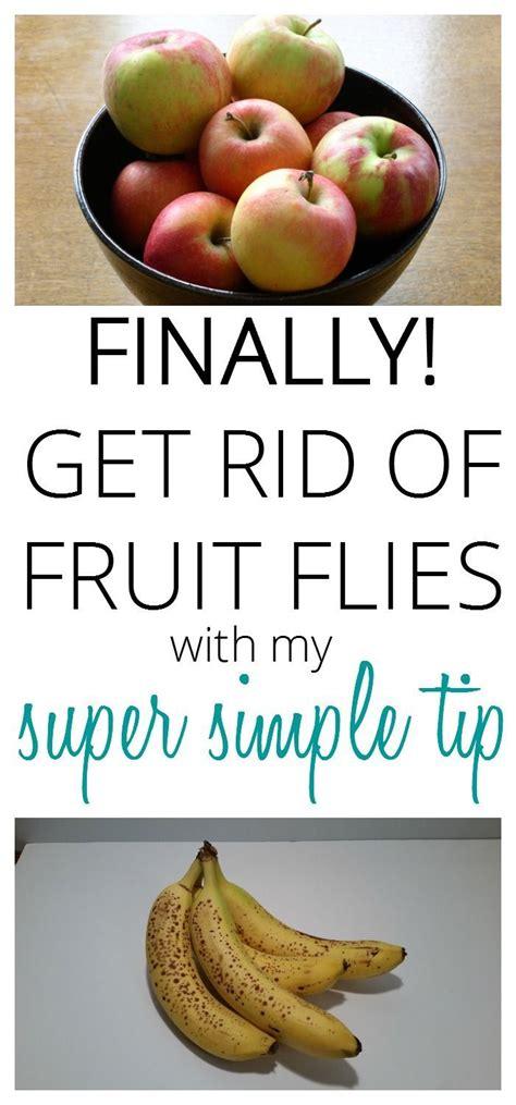 25 best ideas about fruit flies on killing