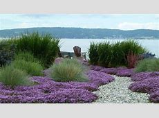 Thymus, grass and gravel! Garden Pinterest Gardens