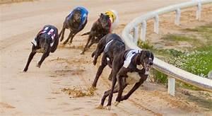 Irish Greyhound Racing