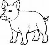Coloring Pig Schwein Colorir Desenhos Porco Cochon Kleines Colorare Tiere Imprimir Porcos Ausmalbild Dibujo Malvorlage Maialino Puerco Supercoloring Colorear Ausmalbilder sketch template