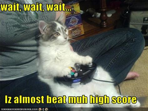funny cat games  high resolution wallpaper