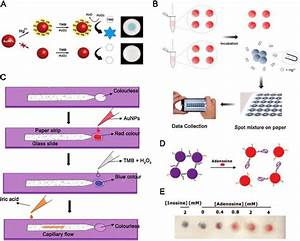 A  Visually Sensing Mechanism For Hg 2  Ions Based On The