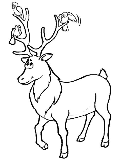 deer coloring pages coloringpagescom