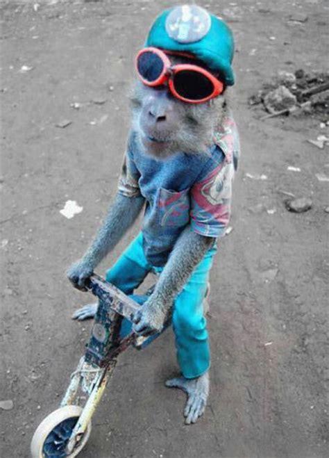 Monkey 110 Image by Images Dr 244 Le Singe Sur V 233 Lo Afrique Photo