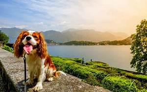 Urlaub Mit Hund Am Meer Italien : italien ferienhaus mit hund am meer eingez unt adria ~ Kayakingforconservation.com Haus und Dekorationen