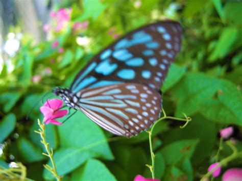 butterfly garden  koh samui