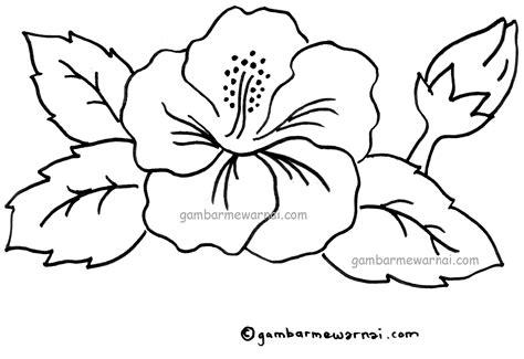 gambar mewarnai bunga kembang sepatu