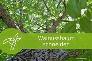 Wann Dahlien Pflanzen : wann was pflanzen johannisbeeren pflanzen wann ist der beste zeitpunkt blumen pflanzen ~ Frokenaadalensverden.com Haus und Dekorationen