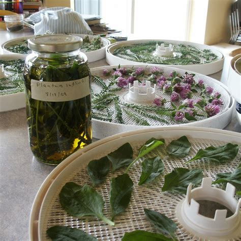 how to harvest herbs simple tips for harvesting herbs 3 easy ways to dry herbs guest post the prairie homestead