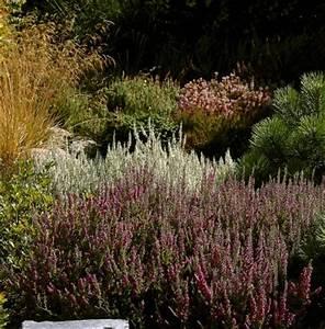 Hilfe Im Garten : heidelandschaft im garten gestalten garten pflanzen ~ Lizthompson.info Haus und Dekorationen