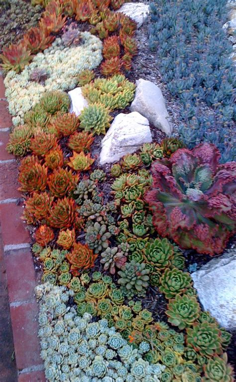 succulent flower bed succulents dry river bed ideas xeroscaping pinterest