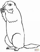 Prairie Dog Coloring Pages Brown Drawing Squirrel Ground Printable Getdrawings Supercoloring Categories sketch template