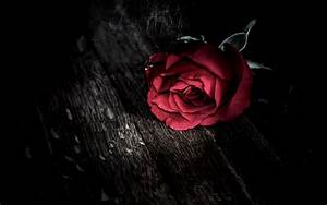 Dark gothic holidays valentine's day roses mood wallpaper ...