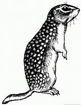 Gopher Animal Coloring Pages sketch template