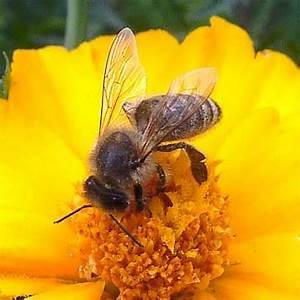 Wie Vertreibe Ich Wespen : unterschiede zwischen bienen wespen und hornissen ~ Orissabook.com Haus und Dekorationen