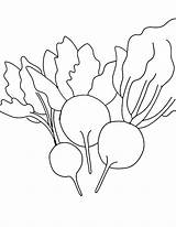 Beets Coloring Pages Learn sketch template