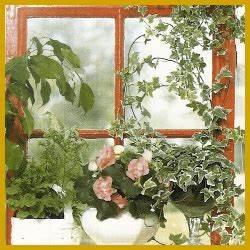 Pflanze Für Dunkle Räume : f r ostfenster und westfenster geeignete zimmerpflanzen ~ A.2002-acura-tl-radio.info Haus und Dekorationen