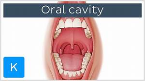 Overview of the Oral Cavity (preview) - Human Anatomy ...