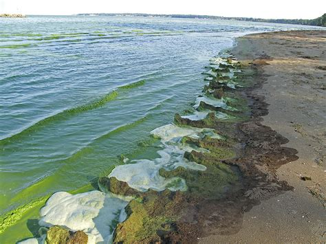 Boat Forecast For Lake Erie by Worse Lake Erie Algae Woes Forecast The Blade