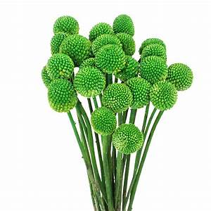 Go Green for St Patrick's Day and Save! FiftyFlowers