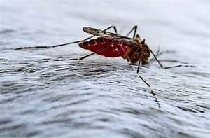 Mückenplage Im Haus : insekten aktuelle themen nachrichten bilder stuttgarter nachrichten ~ Orissabook.com Haus und Dekorationen