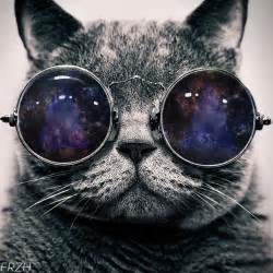 cat glasses cat with space glasses by frzhdzn on deviantart
