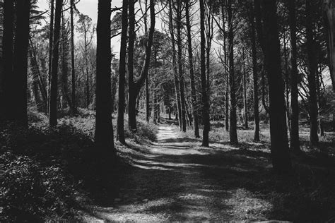 fotos gratis arbol naturaleza bosque rama en blanco