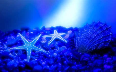 wallpapers starfish wallpapers