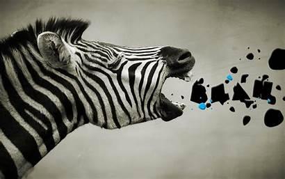 Zebra Wallpapers Wallpapercanyon
